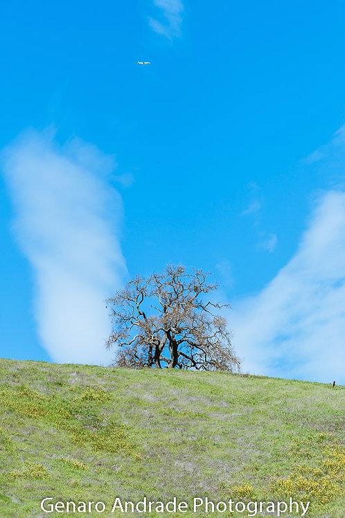 """Angel Tree 1"""
