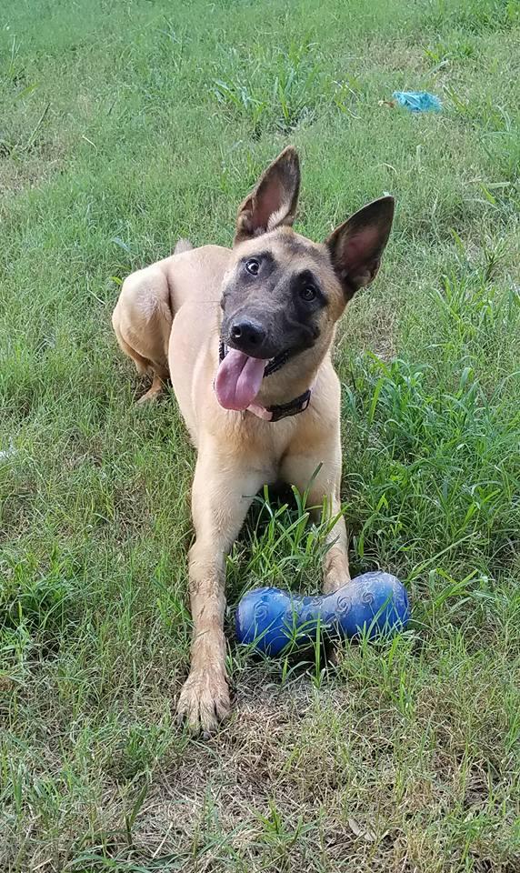 Jasmine - Adopted September 2017