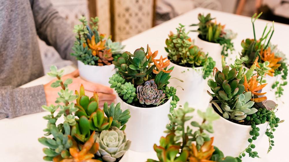 succulent native arrangement