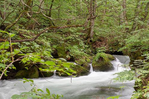 奥入瀬渓流3324Lサイズ