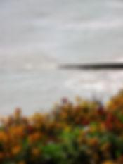Wallflowers on the Cliffs Lynda Alsford.