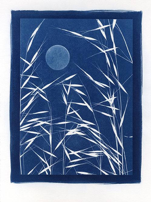 Luna nel canneto #1 in blu, 2017