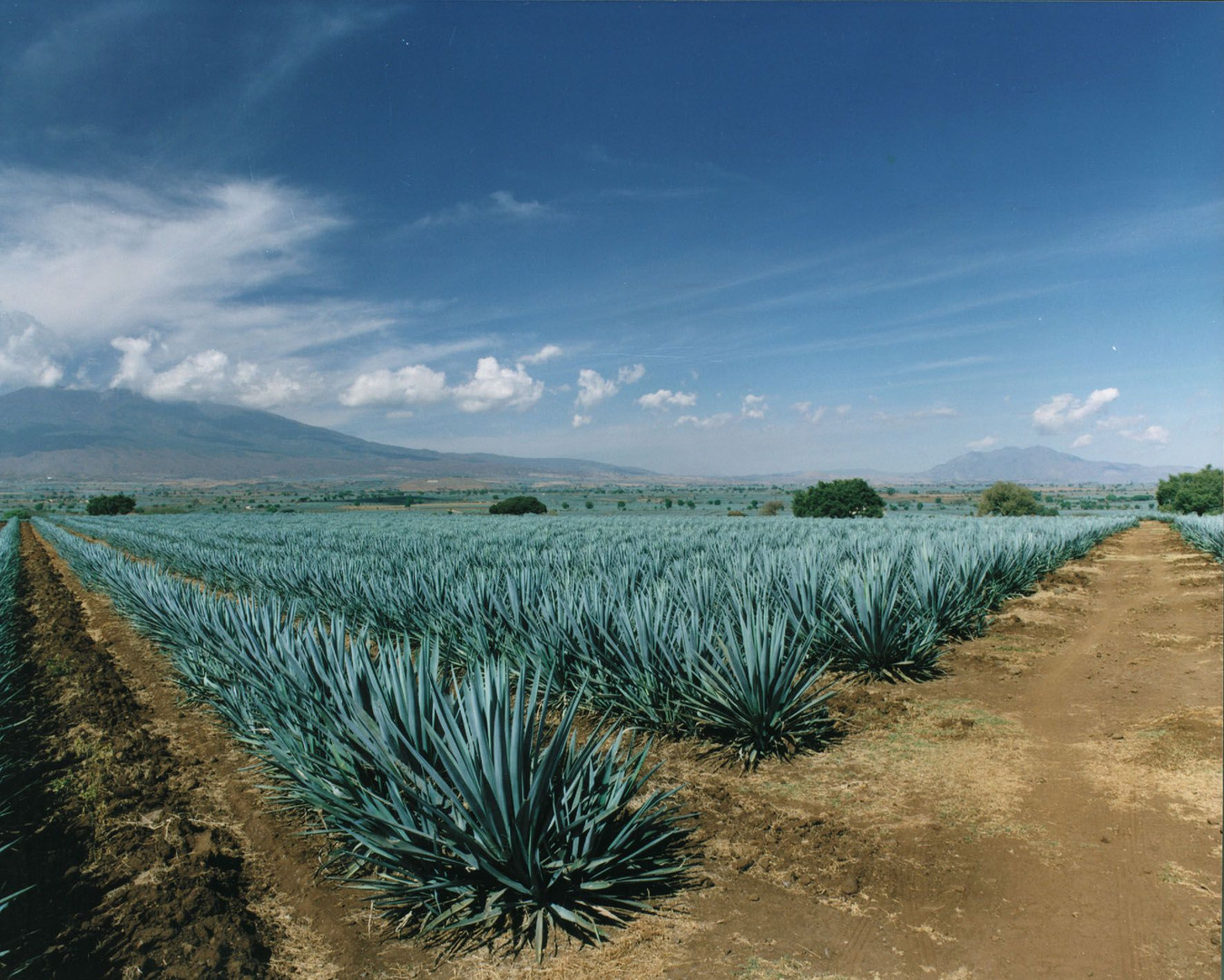 Agave-Fields-compressor.jpg