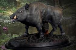 boar 1
