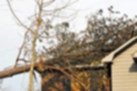 tree damage st petersburg
