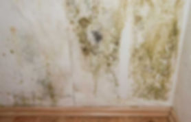 black mold removal remediation