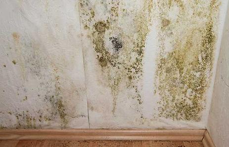 black mold removal remediation