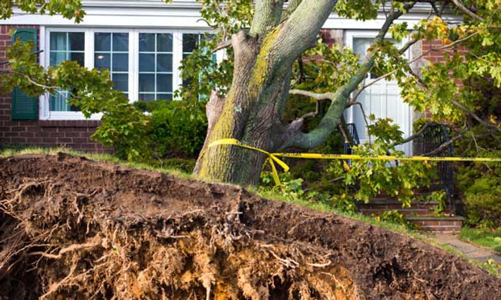 tree damage guardin restoration servics