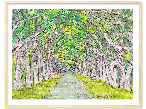 Wormsloe, Live Oaks Avenue (Savannah, GA) - Print