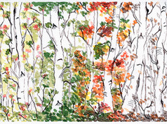 Birch Forest, Four Seasons