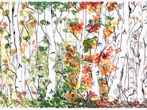 Birch Forest, Four Seasons