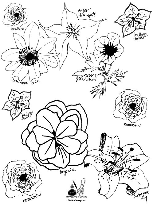 FLOWERS Coloring Page - use coupon code TIMETOCOLOR