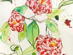 Savannah Camellias