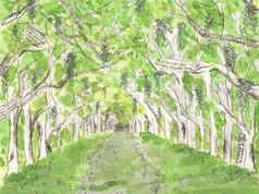 Wormsloe Oaks