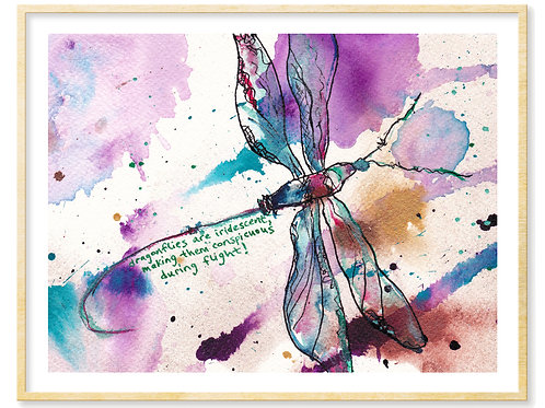 Dragonflies are Iridescent - Print