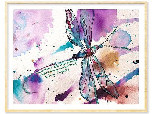 Dragonflies are Iridescent - Print