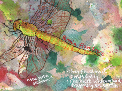 The Highest-Flying Dragonfly
