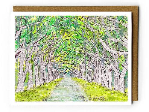 Wormsloe, Live Oaks Avenue (Savannah, GA) - Blank Card