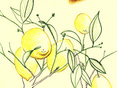 Lemon Tree and Square