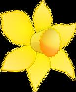 Daffodilssss.png