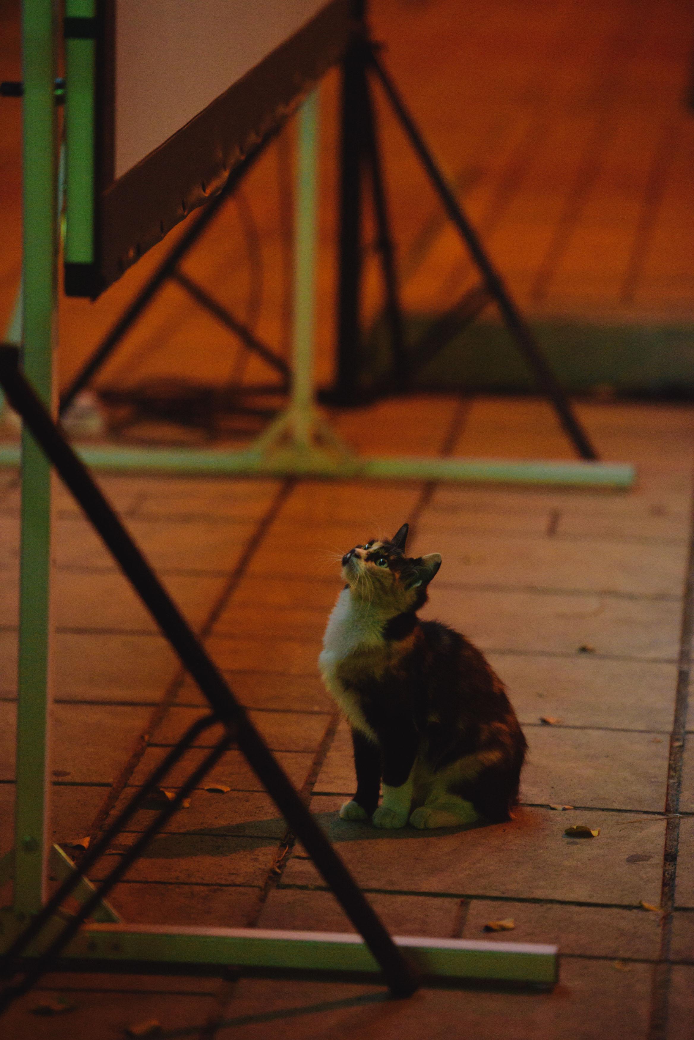 18 OKT17_395 Short Films