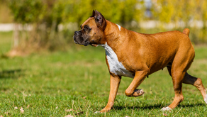 Five Ways Your Dog Can Benefit From Doggy Daycare