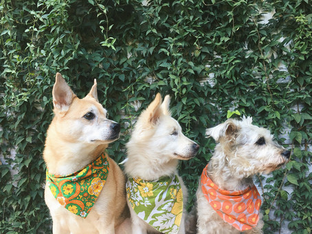 Help Your Dog Beat the Heat in the Summer Months