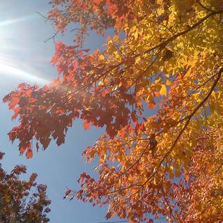Autumn, 2011