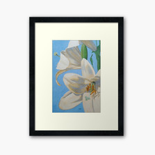 Lilies, Considered