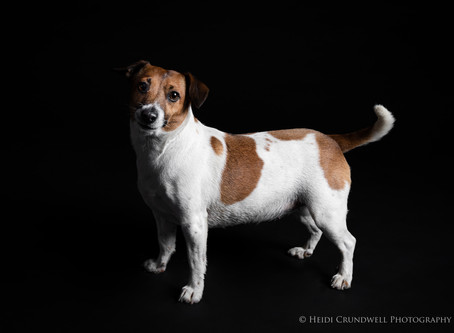 A fun shoot with a joyous Jack Russell