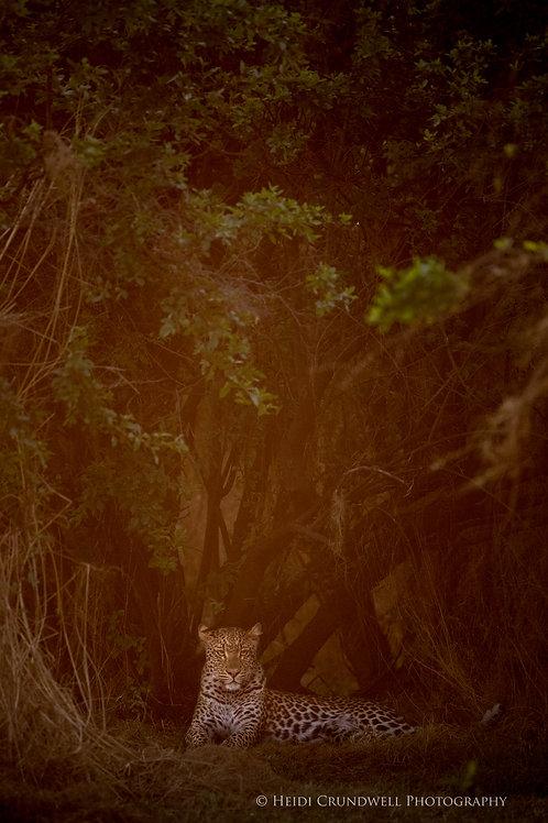 Print- Leopard in Haze