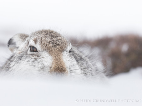 In search of Hare