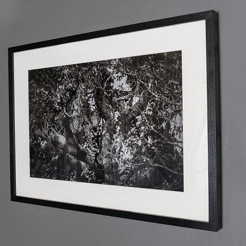 Framed print- Spotted