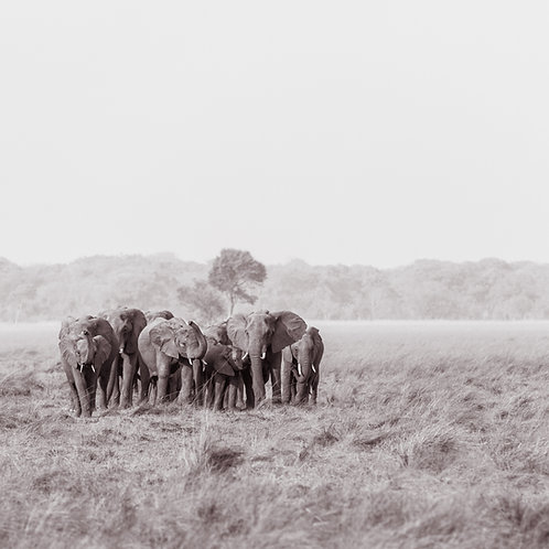Card-Elephant herd