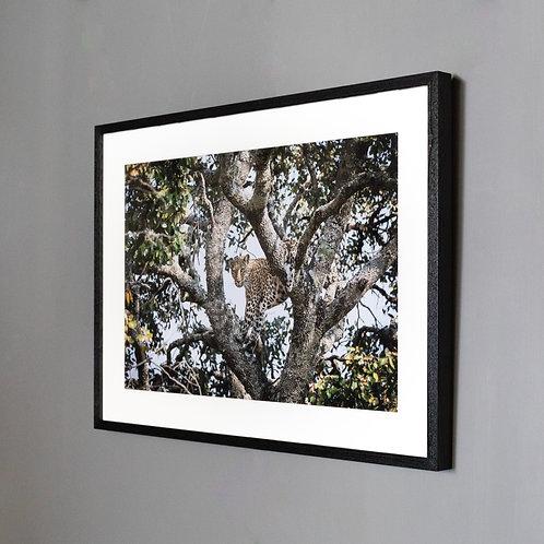 Framed print- The Long Wait