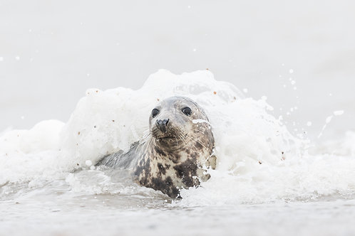 Print-Seal in the surf