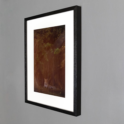 Framed print- Leopard in Haze
