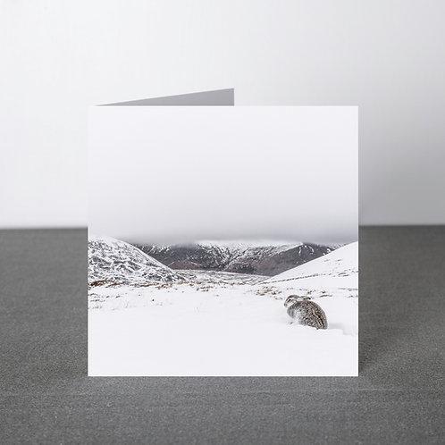 Card- Beautiful Isolation