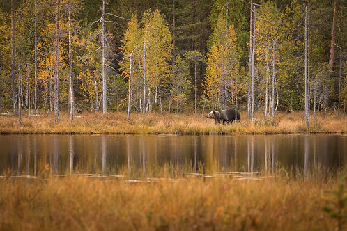 Print-Autumn bear