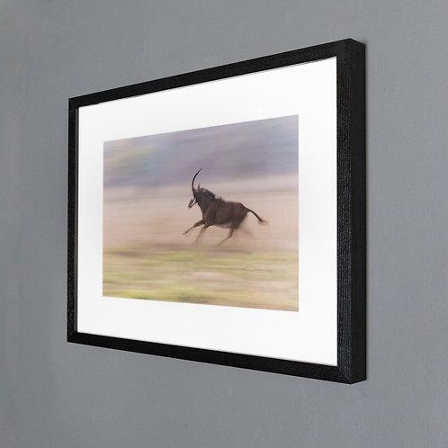Framed print- The Chased