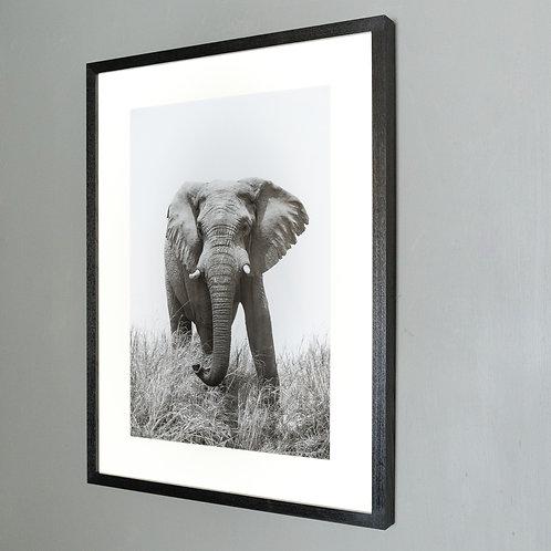 Framed print- Majesty