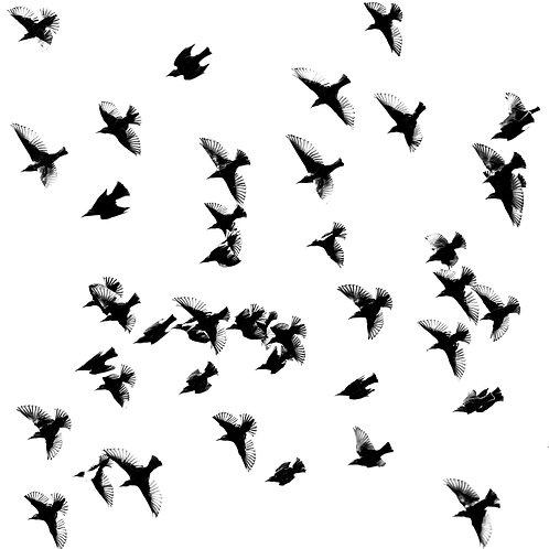Card- Starlings in Flight