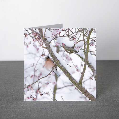 Card- Chaffinch in winter blossom