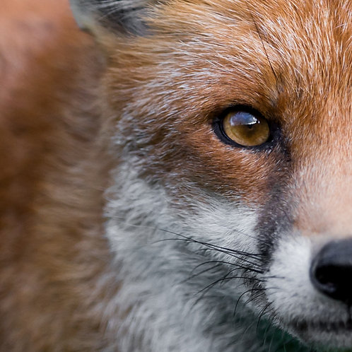 Card- Fantastic Mr Fox