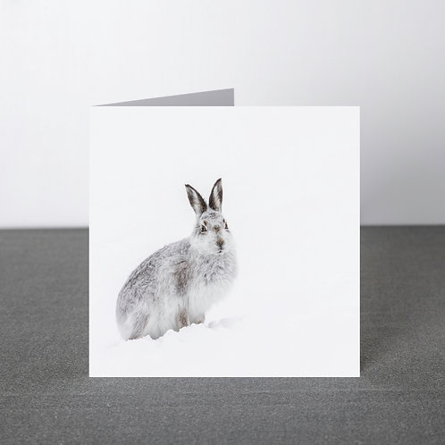 Card- Mountain Hare