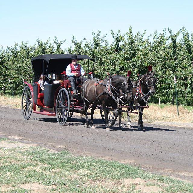Wine Ride Offering 2