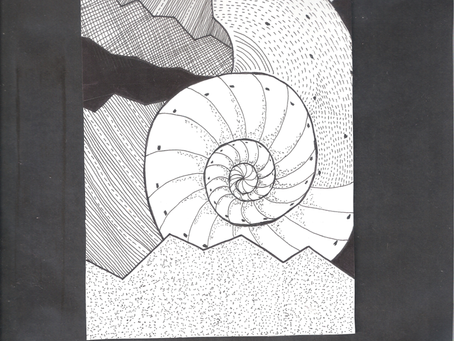 Seashell Design in India Ink