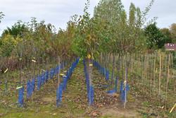 Les plantations de fruitiers