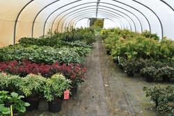 Serre de plantes de terre de bruyere