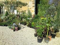 Jardin de Marie 2012